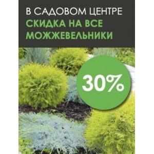 Скидка на хвойные растения 30%