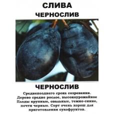 чернослив слива алыча саженцы купить в алматы питомник растений Rostok