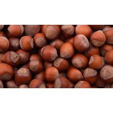 Фундук купить в алматы саженцы лесной орех отправка по казахстану питомник растений Rostok