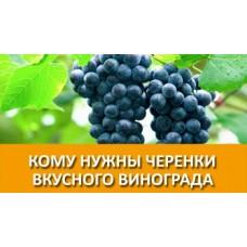 саженцы черенки винограда купить в алматы питомник растений Rostok