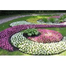 Изготовление цветников из многолетних растений