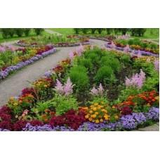 Создание клумб цветников