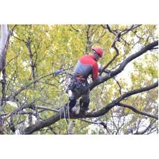 Спиливание и удаление деревьев
